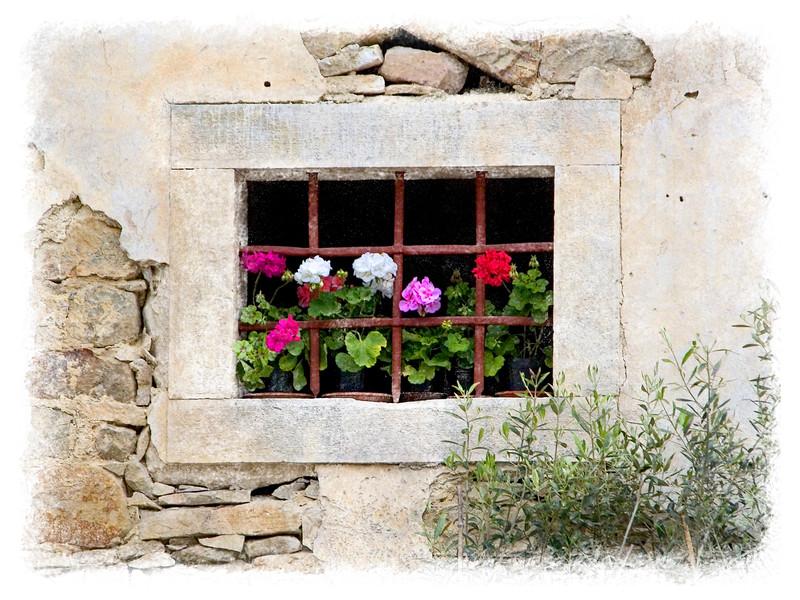 Windowsill Geraniums # 2