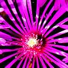 STYLIZED FLOWER PHOTO