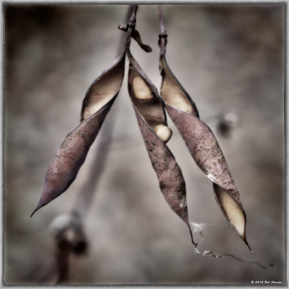 Empty Seed Pods, Version 1