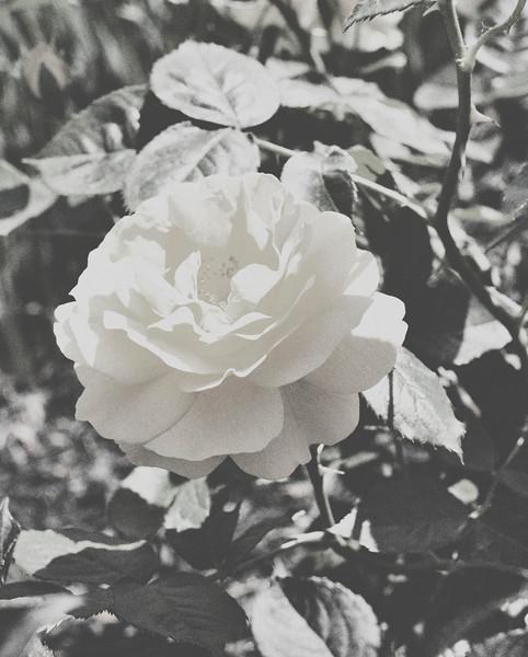 flower06072016_2