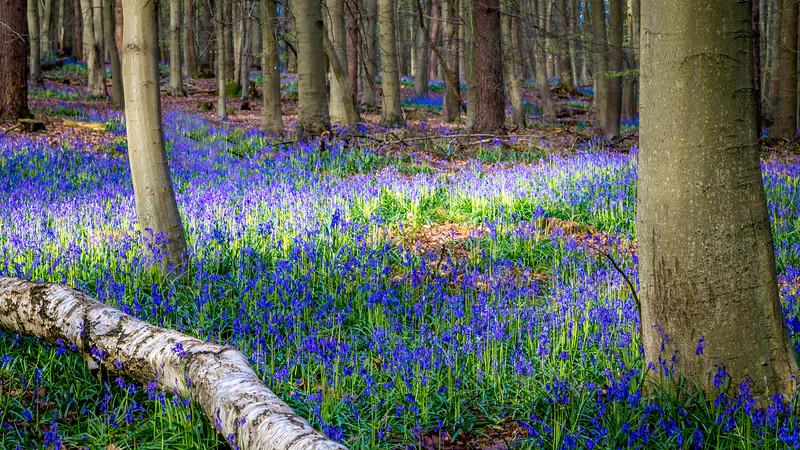 Hitch Woods Hertfordshire 2016