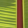Banana Leaf, Seabright