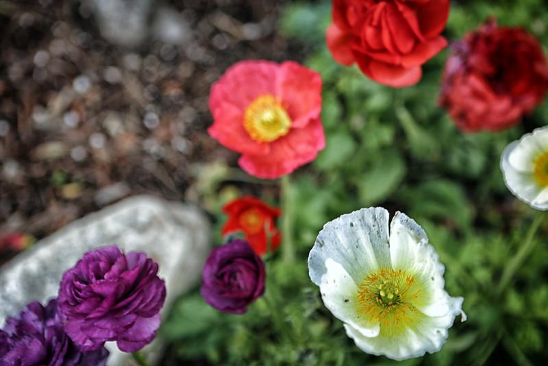 California Flower 2