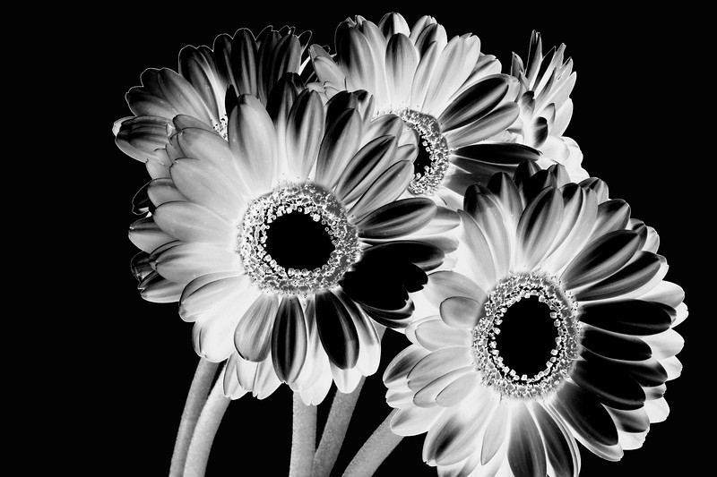 Solarised Flowers