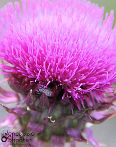 pink flower with bee-5