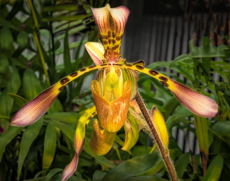 Alien Orchid
