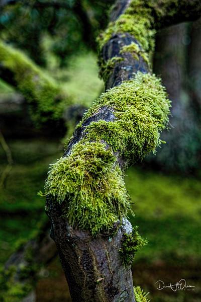 Mossed Tree
