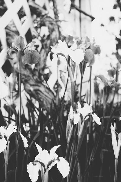 flower 06012016_2