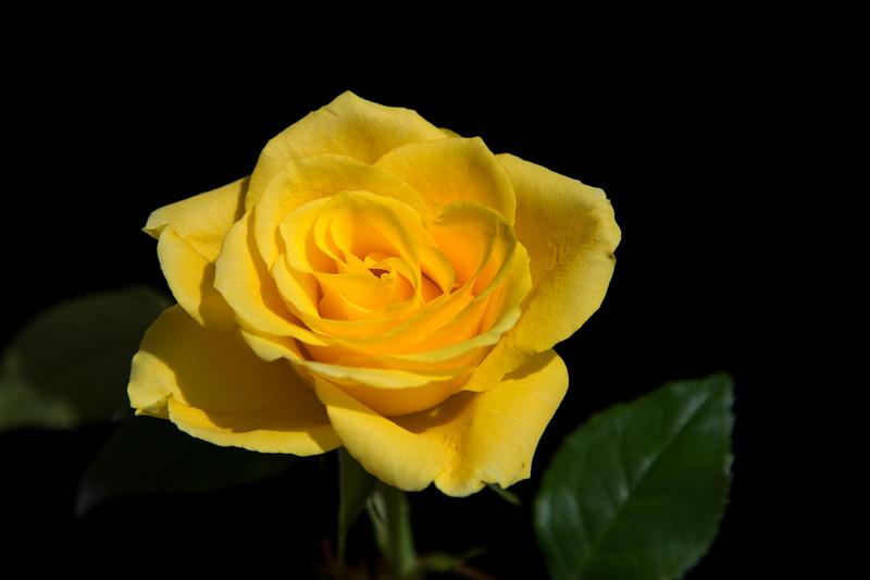 Single yellow
