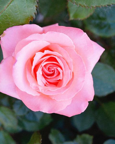 flower06072016