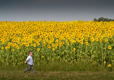 Boy with the sunflowers