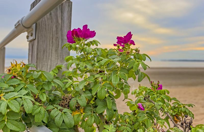 TLD_Flowers on boardwalk