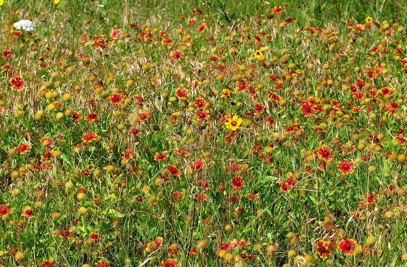 Pretty Patch Of Wildflowers