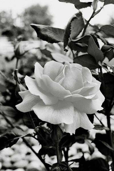 flower 06012016_12