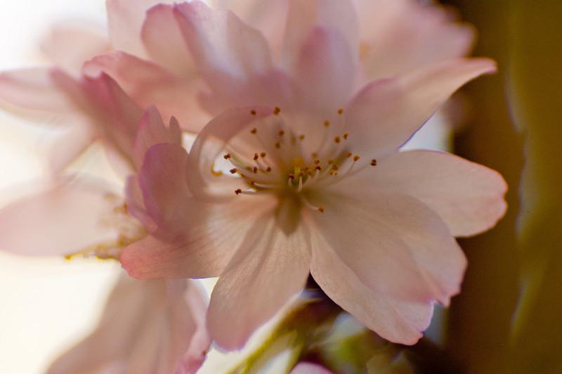 flowerPower-4