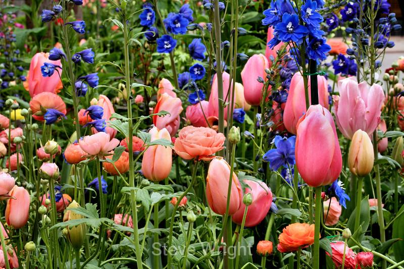 Tulip (122) D