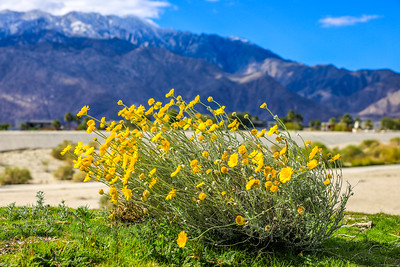 Chuck-Harris Palm Springs