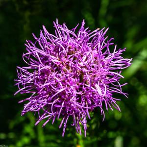 Chuck-Harris-Flowers-Macro