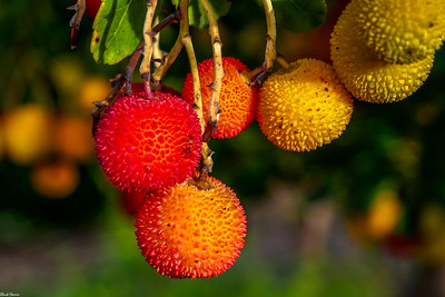 Chuck Harris Local Berrys