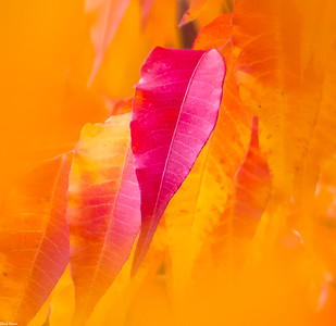 Chuck Harris Fall Colors