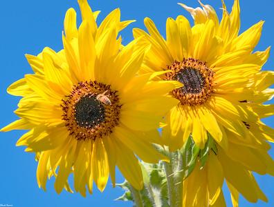 Chuck-Harris-Flowers-Macro Sonoma County