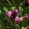 Purple beauty after the rain