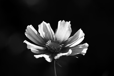 August Black and White