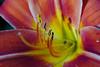 Pollen and petals