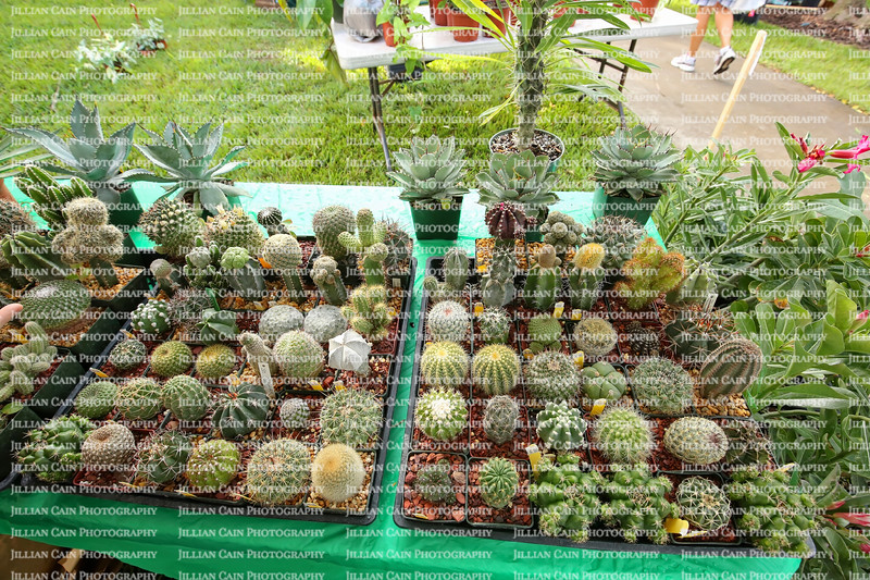Cacti for sale at a local plant sale