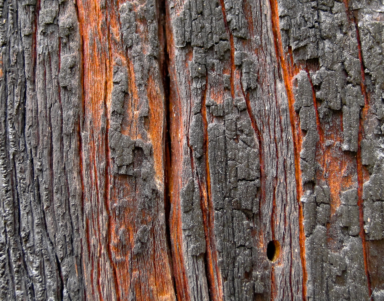 This burnt tree bark caught my eye.  It's a little blurry, thus probably shouldn't be viewed larger.<br /> <br /> Location: Ochoco National Forest, Oregon<br /> <br /> Lens used: n/a (Canon S1 IS point-and-shoot)