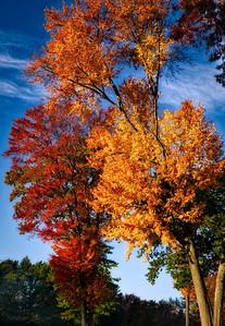 11th Foliage - HGC
