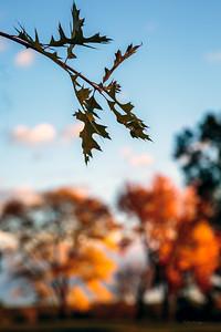 18th Foliage