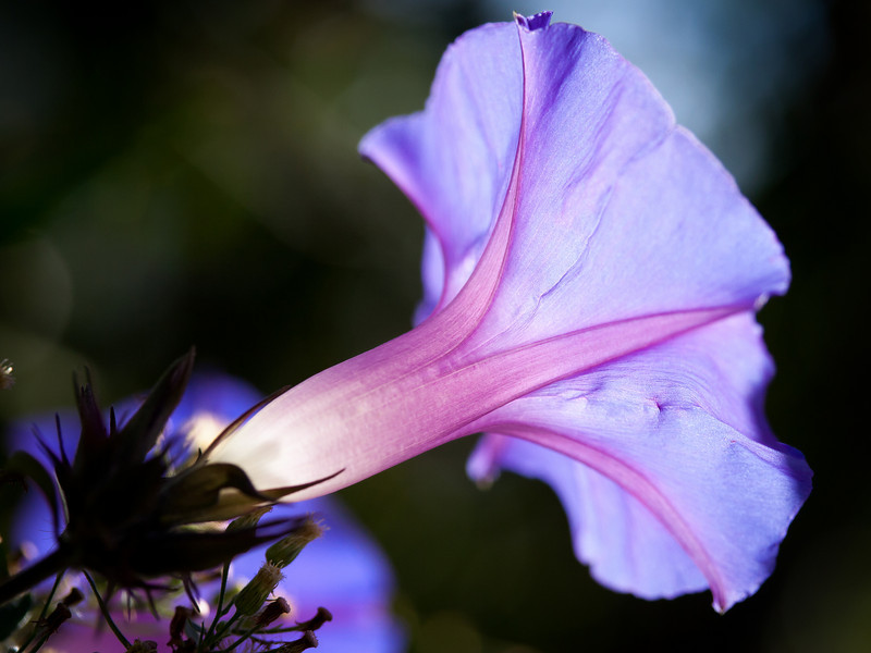 What's the story, Morning Glory.<br /> <br /> Location: Mt. Shasta, California<br /> <br /> Lens used: Canon 60mm f2.8 Macro