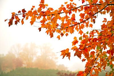 Fall Foliage Misty Morning