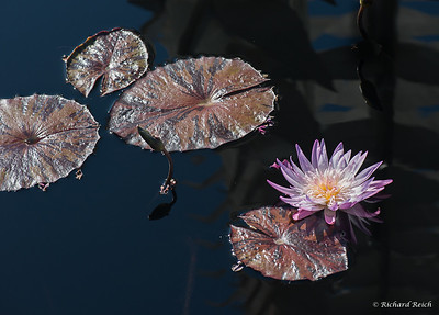 Naples Botanical Gardens-Lilly-4057-2