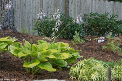 Westwood Garden 7-28-12-1438