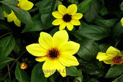 Flowering Suns