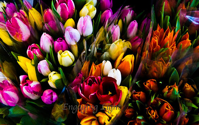 Water Color Tulips