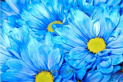 Sky Blue Blossom