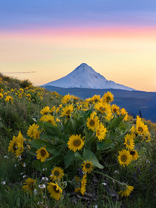 Mount Hood Sunset