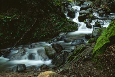 Stream, Los Padres National Forest, California, 1995