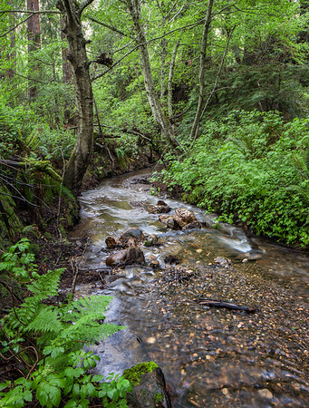 Purisima Creek #2