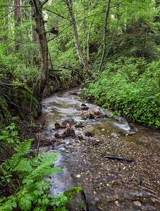 Purisima Creek #2