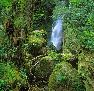 Quinault Rainforest, Washington