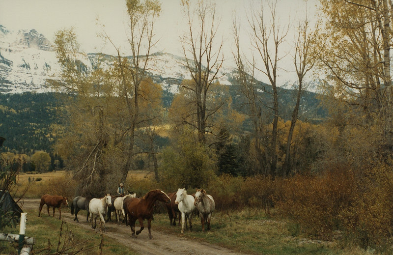 """Grand-dad"" bringing in the horses in the morning. (Floyd)"