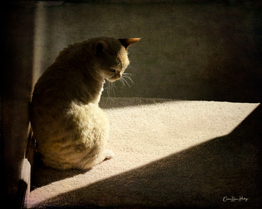 Be a Cat - Look for the Light Amidst the Darkness