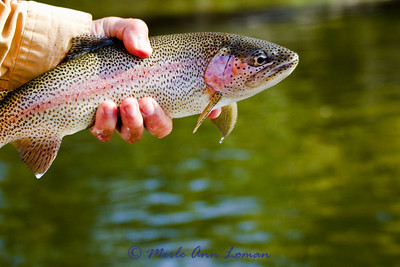Western Montana fly fishing in Oct 2010
