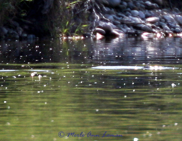 more hatch, more trout rising