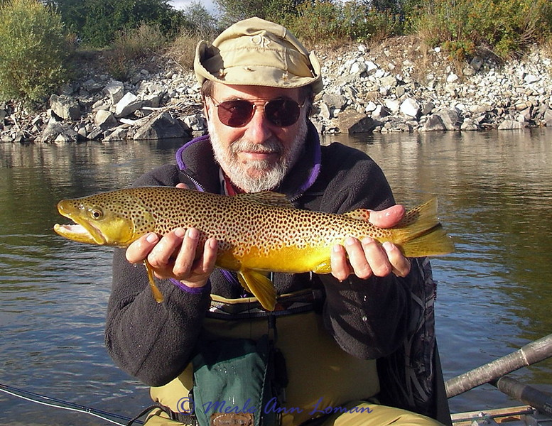 Beautiful brown trout caught by David on the Bitterroot.