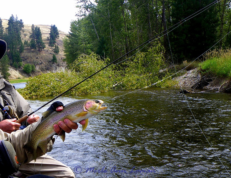 Mike's trout